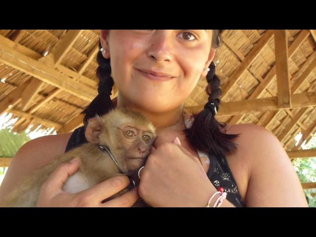 Affen Baby streicheln auf Koh Lanta Thailand Juli 2011 Part 2 with Panasonic Tz22 1080i