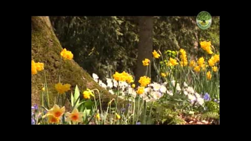 W A Mozart_Impressions Spring