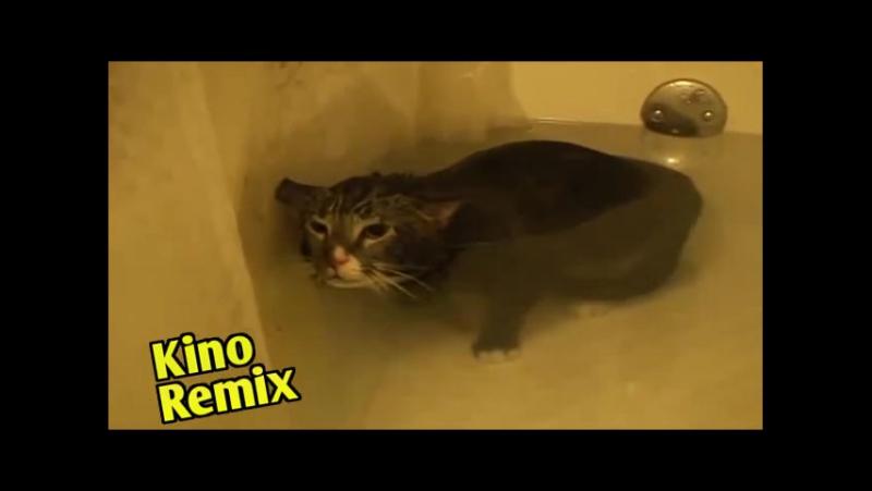 72 метра фильм 2004 kino remix смешные приколы с животными ржака юмор смешные коты