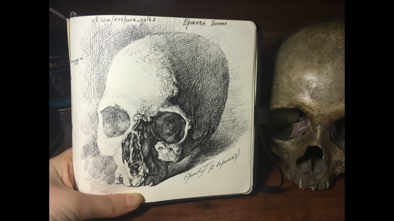 ByGalinaErshova (рисунок натурального черепа)