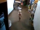 смешная танцующая собака