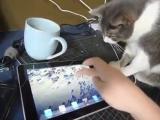 Кот, ipad, ржака, смешно, котик, до слез, прикол, Apple, приложения :)