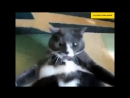 Смешные кошки приколы про кошек и котов 2017 52 Смешное видео - Funny Cats