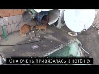 Почему кошка берет еду только в пакетах...