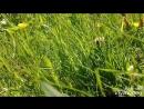 Счастье, оно есть во всем: в солнечном зайчике, в ветре, в траве, в запахе корицы и яблока; оно спрятано  в маминых звонках, в с