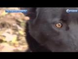 Собака на сломанных лапах прошла 300 километров, чтобы вернуться к хозяйке
