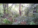 Шум дождя для сна Релаксация звук дождя Звуки природы для сна HD video 2