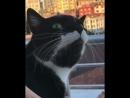 Кот в режиме перезагрузки ОС