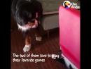 Today on Odd Couples, watch how this dog and cat's little games have gotten cuter and cuter over the years
