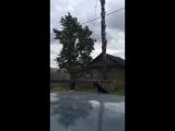 Как правильно падать дереву