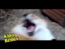 бриллиантовая рука пародия 2017 kino remix смешные приколы с животными смешные животные подборка ржака юмор лиса обкуренный лис