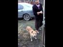 отпилили лапу псу