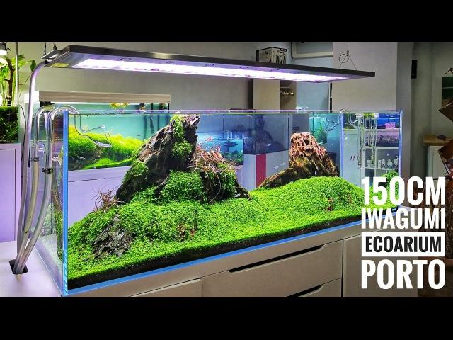 150cm Iwagumi - Ecoarium store Porto