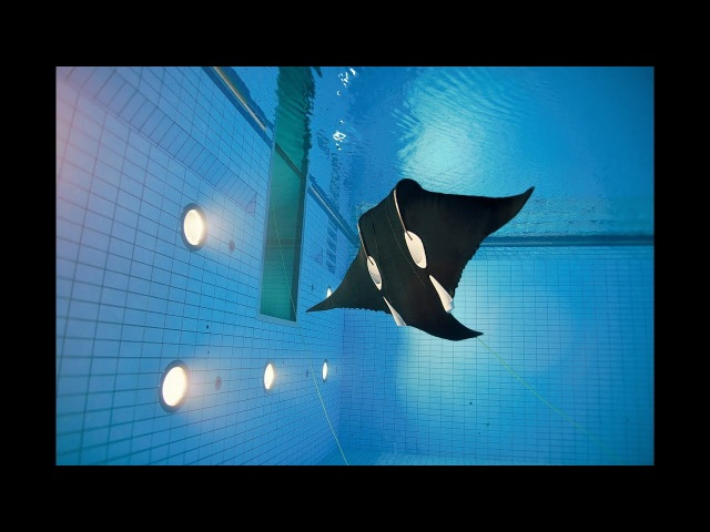 EvoLogics BOSS Manta Ray - the stunningly lifelike subsea robot for automated monitoring