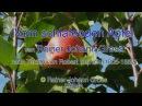 Kinderlied: Vom schlafenden Apfel - Rainer Johann Gross - Robert Reinick