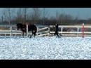 Заездка молодой лошади в упряжь. Работа на вожжах.