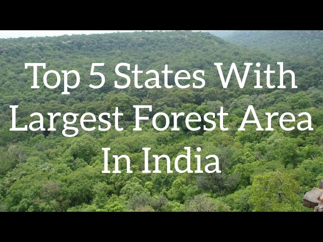 Top 5 States With The Largest Forest Area || INDIA ROUNDUP