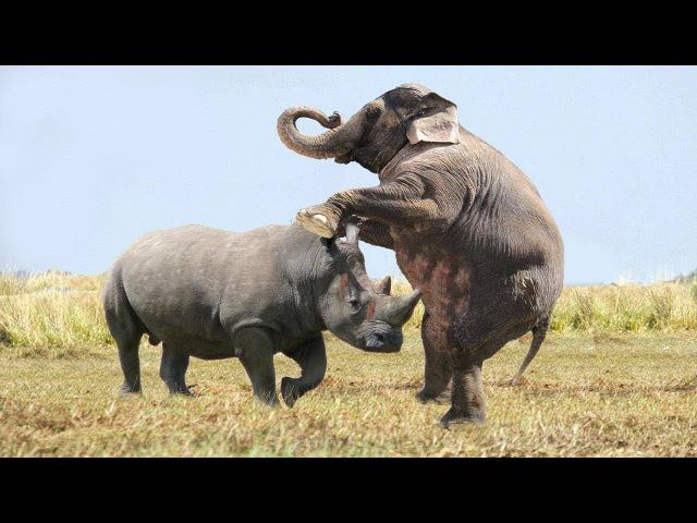Crazy Rhino attacks Elephant Big Battle, The results were unexpected | Elephant Hero