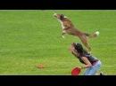 Dogfrisbee European Championship 2013 (USDDN) Promo