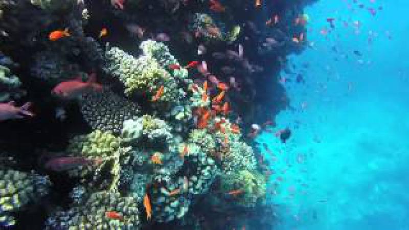 Safaga Egypt 2015 Lotus-Bay-Hotel diving red sea