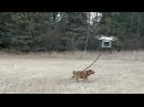 Quadro vs Dog
