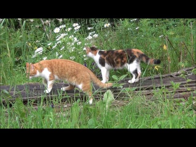 Кошки на воле / ЛапУшки Котейки