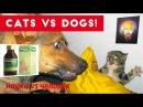 кошки vs собаки, cats vs dogs.