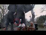 On a hair from death. Elephant has attacked tourists and has crushed the camp Unique shots