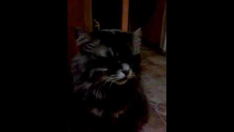 Муська обжора - ненасытная кошка 😹 😀😀😀