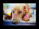 Преображение самого грустного пса в мире