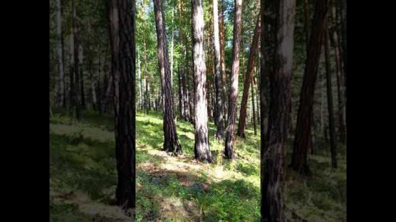 Колокольный звон в лесу. Вероника Ситникова