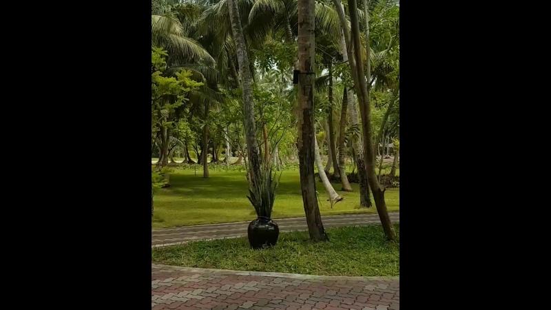 Территория отеля SunIslandResort Парки, площадки для спорта и гольфа.