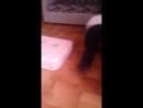 Аврора Кресер - Live