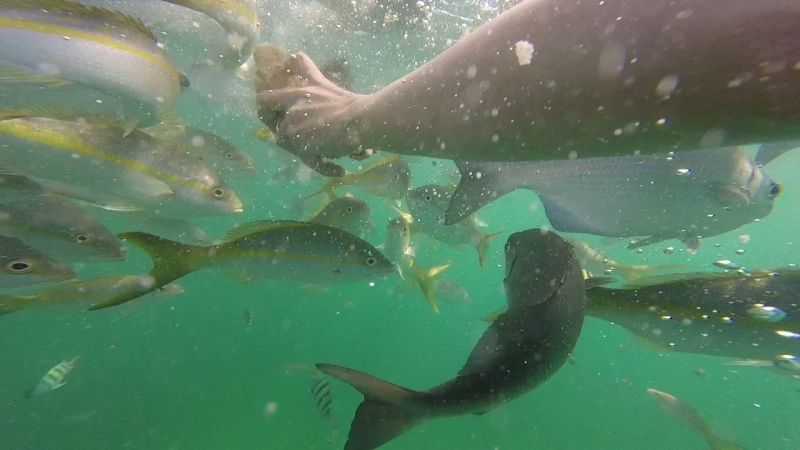 Снорклинг на Кубе, Варадеро 2017   Snorkelling in Cuba, Varadero 2017