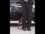 Вот почему так мало полицейских котов