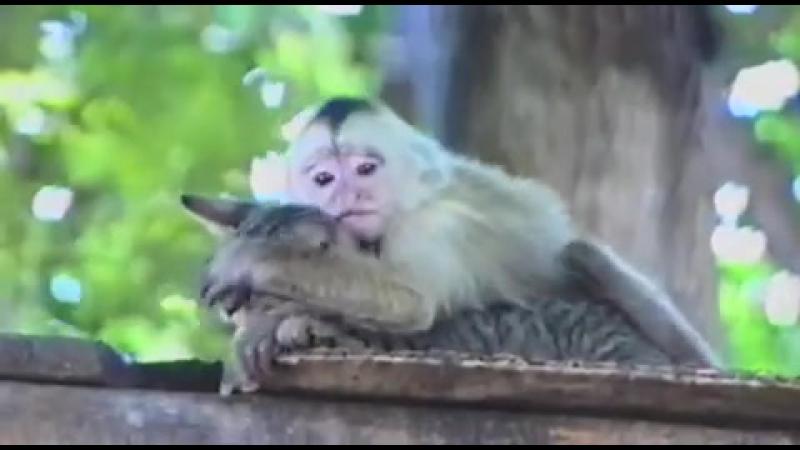 Любовь зла-полюбишь и обезьяну или так выглядит в глазах женщины через чур настойчивы й мужчинка