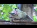 Любовь зла полюбишь и обезьяну или так выглядит в глазах женщины через чур настойчивы й мужчинка