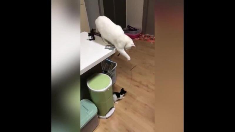 Курс молодого кота