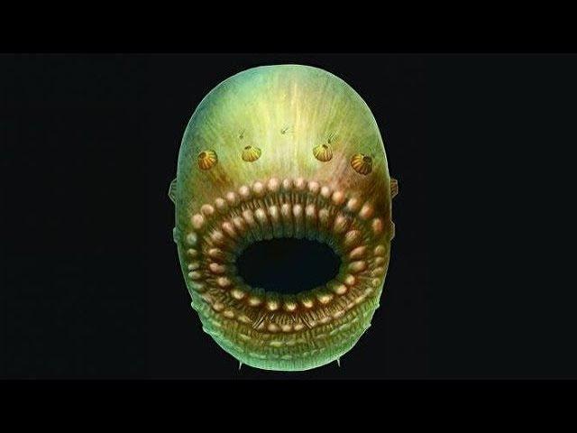 В 2017-м в Китае археологами найден организм,поразивший всех ученых.Адам и Ева были клонами