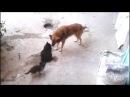 Кошка привела своих котят к лучшему другу собаке