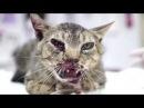 Топ 5 самых трогательных видео на YouTube - 2 часть. Которые заставят вас заплакать До слез
