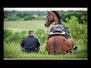 Самые смешные ПРИКОЛЫ С ЛОШАДЬМИ, Смешные лошади Funny horse, funny videos 5