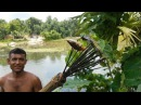 Amazing Fish Hunting / Wild Style Fishing In Village / Catch Fish Using Hand Arrow