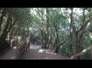 Природный парк Анага - одна из самых интересных индивидуальных экскурсий на Тен ...