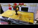 🌼 Caminho de mesa em Crochê 2/2 . Tutorial Por Vanessa Marcondes.