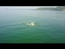 Розовые дельфины в Гоа