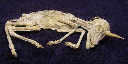 скелет единорога