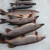 Рыбалка в Бокситогорске