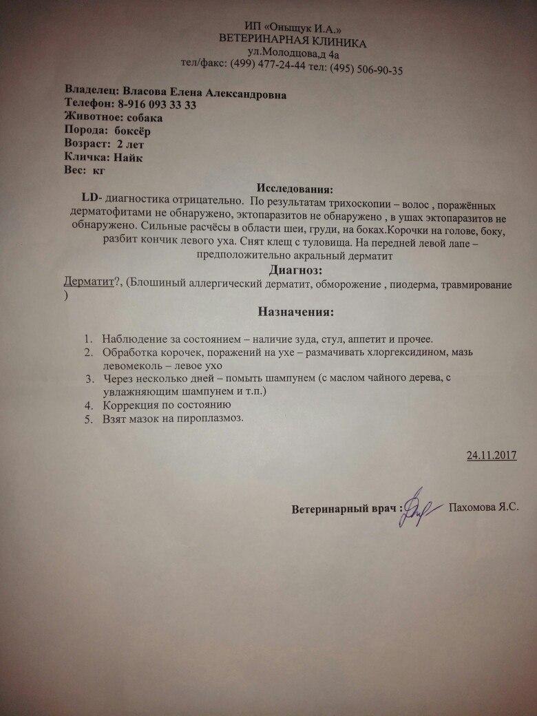 Москва, Найт,  кобель, 24 ноября 2015 FOZ2q2mtGtw