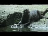 Милые и СМЕШНЫЕ животные, приколы⁄Funny Animal vines compilation, cute video